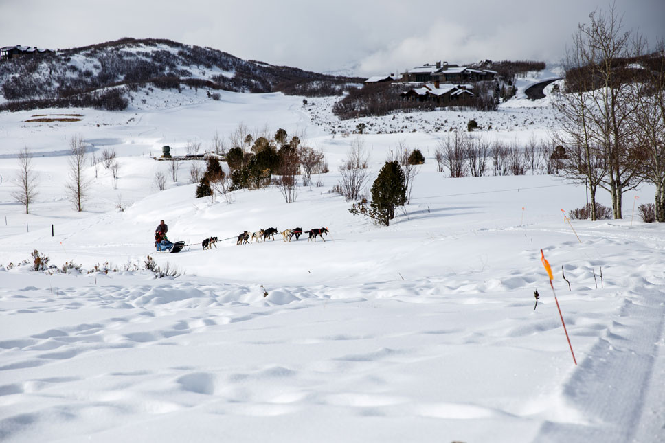The more weight in a sled, the more dogs have to be added to the tow rope and the less control the driver has. Apparently, Mahana requires eight cows and we require nine dogs.