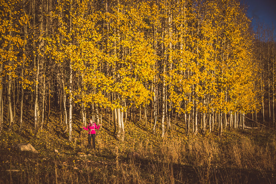 The aspens forming this wall were the last sentinels of color that remained in Moonlight Meadow.