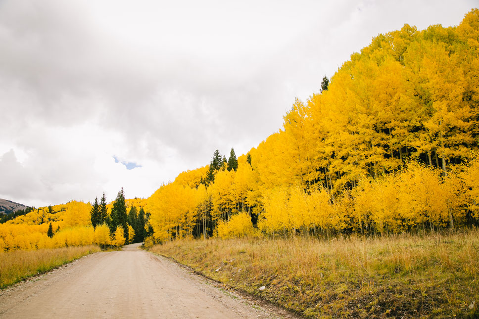 Glorious summer sunshine seemed to seep out of every aspen leaf we came across as we traveled upward.