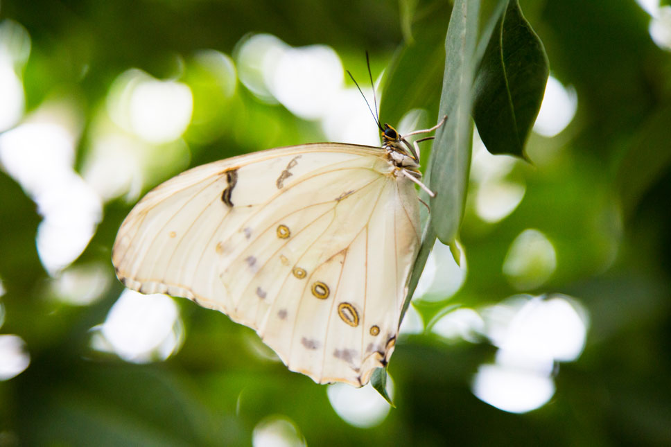 At Butterfly Wonderland, thousands of butterflies and moths fly freely around you.