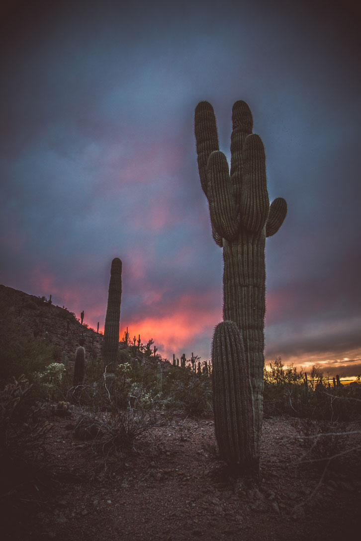 Bristly saguaros silhouetted by a technicolored sky make for a mighty memorable sunset.