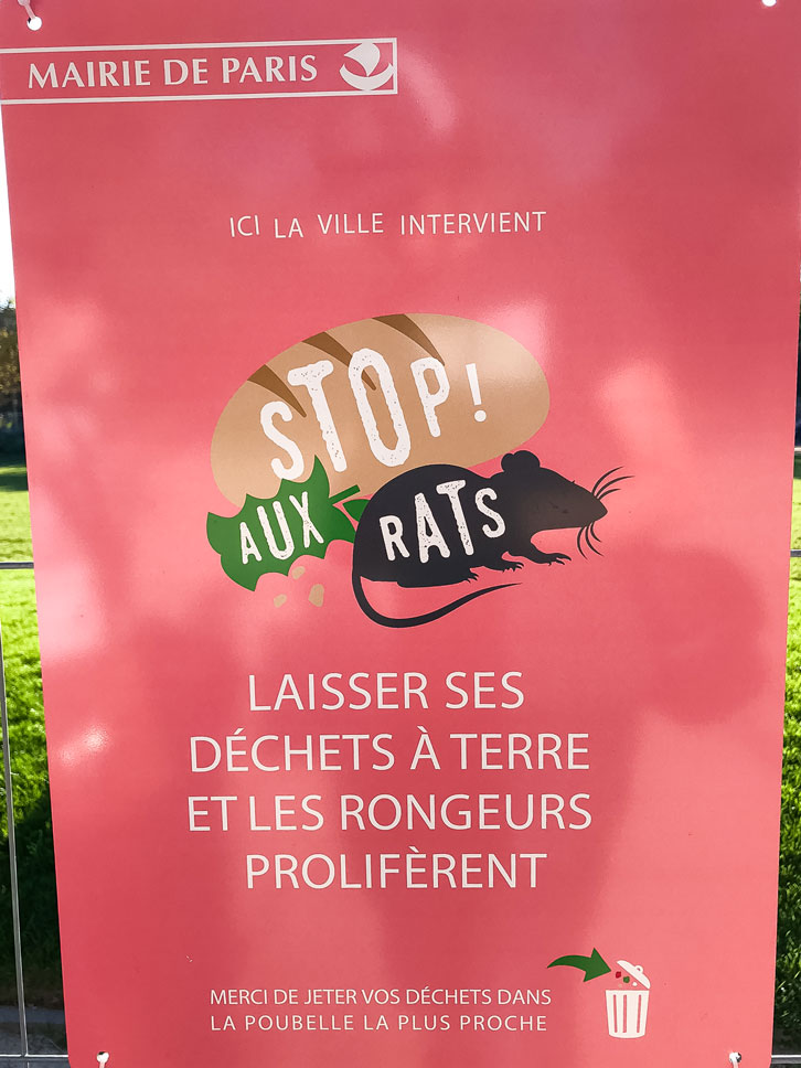The rats in Paris are nearly as common as the croissants.